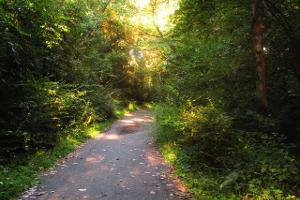 Laufen in der freien Natur entspannt