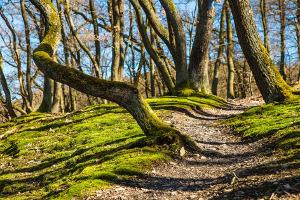 Trailrunning: Der Wald bietet eine Vielfalt an wilden Pfaden